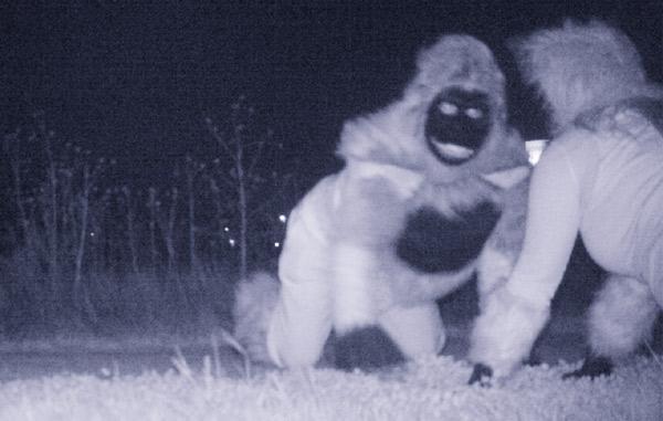 night-cam-gorillas