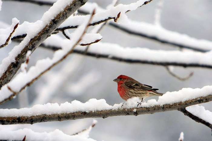 Bird on a snowy branch