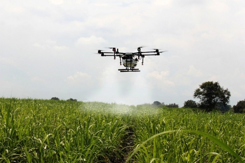 Agricukture drone spraying sugar cane